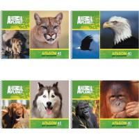 Альбом для рисования ACTION! ANIMAL PLANET, 40 л., на гребне, уф-лак, 2 дизайна